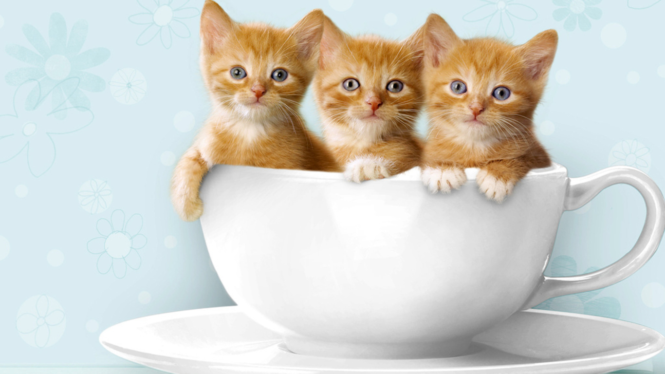 Cute Cat Wallpapers 005 Elementor Addons